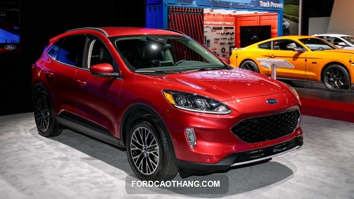 Ford Escape mau do